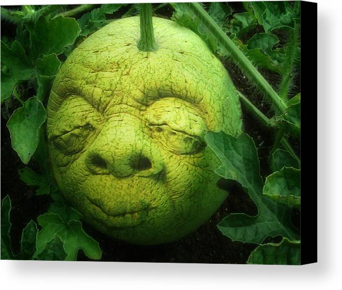 Melon Canvas Print featuring the photograph Melon Head by Jack Zulli