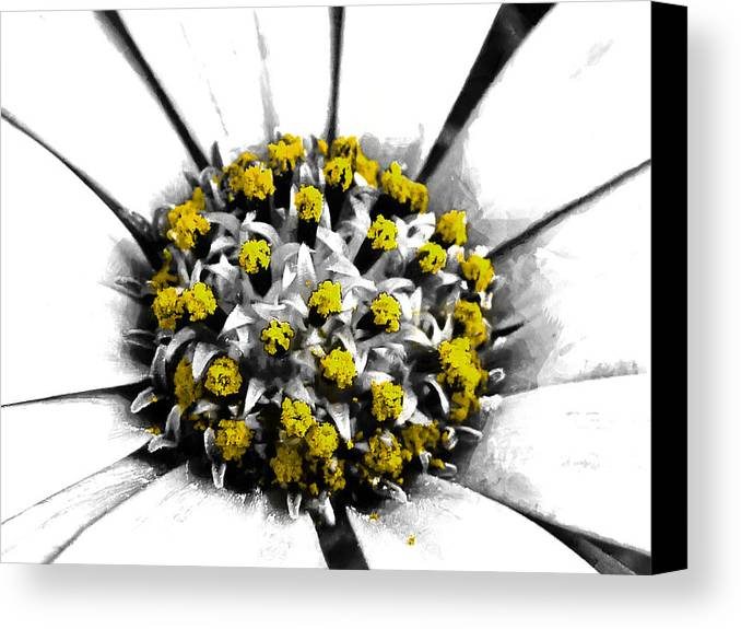 Selective Canvas Print featuring the photograph Pollen by Steve Taylor