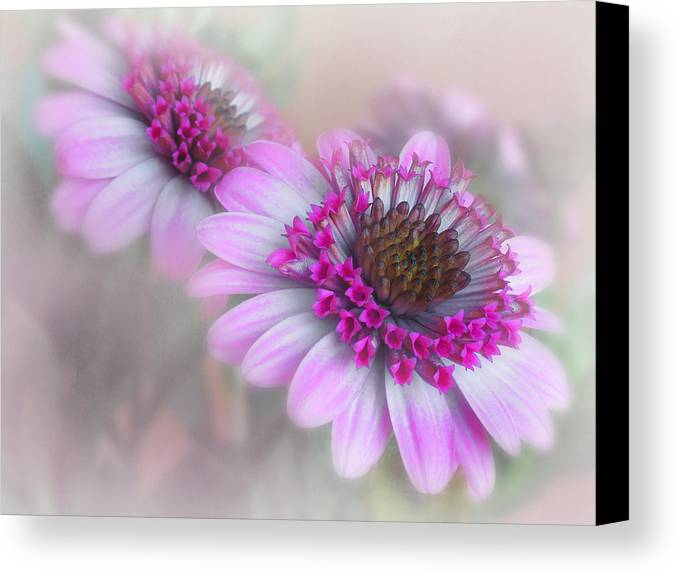 Flower Canvas Print featuring the photograph Purple Blooms by David and Carol Kelly