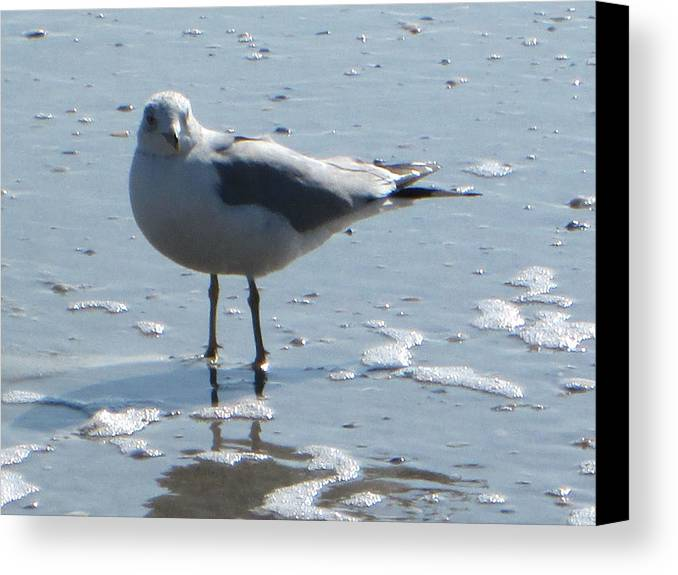 Seagull Canvas Print featuring the photograph Seagull by Silvie Kendall