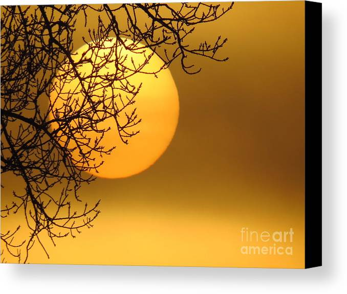 Sunrise Canvas Print featuring the photograph Sunrise Through The Fog by David Lankton