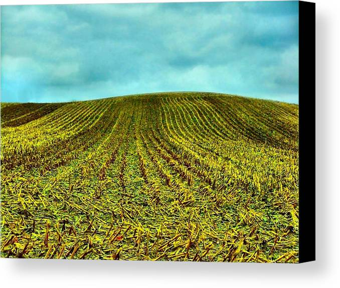 Indiana Corn Rows Canvas Print featuring the photograph The Corn Rows by Julie Dant
