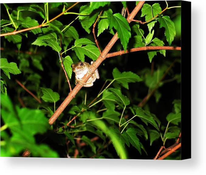 Toad Canvas Print featuring the photograph Tree Toad by Tamara Stickler