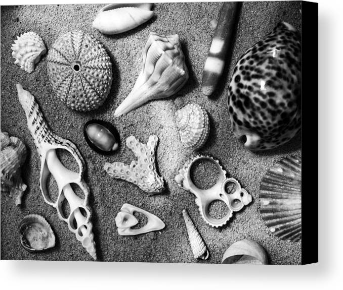 Under The Sea Canvas Print featuring the photograph Under The Sea by Tom Druin
