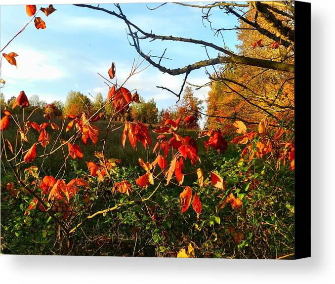Autumn Canvas Print featuring the photograph A Splash Of Red II by Julie Dant