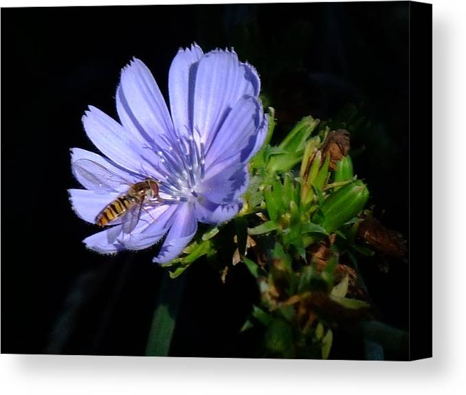 Bee Canvas Print featuring the photograph Buzzy In Blue by Alison Richardson-Douglas