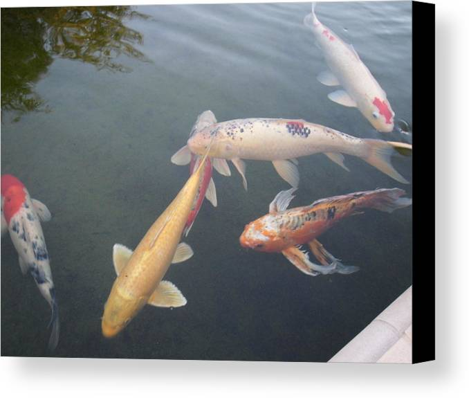 Fish Canvas Print featuring the photograph Fish Swimming by Val Oconnor