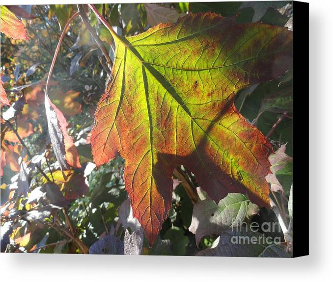 Leaves Canvas Print featuring the photograph Surrender by Trish Hale