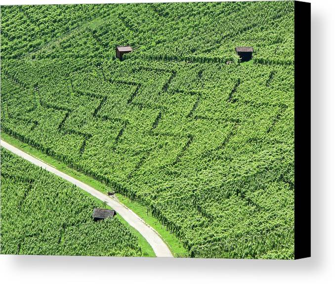 Horizontal Canvas Print featuring the photograph Zig-zag In Vineyards by Ursula Sander