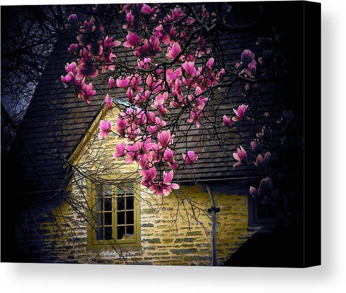 Flowers Canvas Print featuring the photograph Dogwood By The Window by Joyce Kimble Smith