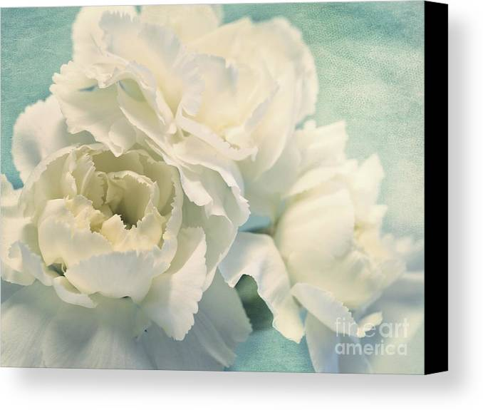 Carnation Canvas Print featuring the photograph Tenderly by Priska Wettstein