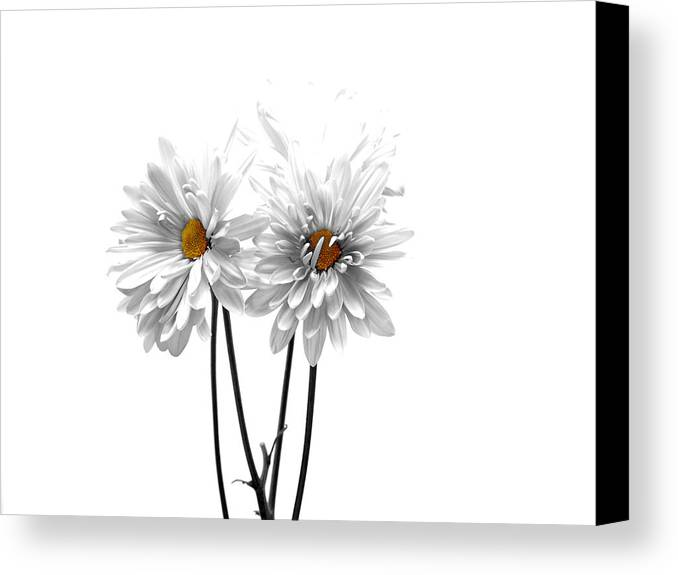White Canvas Print featuring the photograph White On White by Regina Arnold