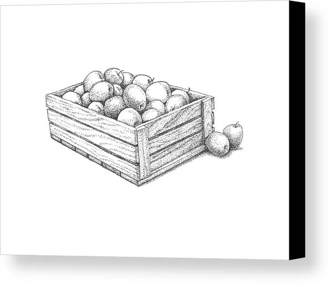 Apple Canvas Print featuring the drawing Applecrate by Christy Beckwith