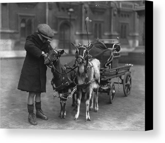 4-5 Years Canvas Print featuring the photograph Goat Cart by Fox Photos