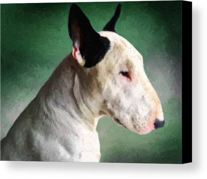 English Bull Terrier Canvas Print featuring the painting Bull Terrier On Green by Michael Tompsett