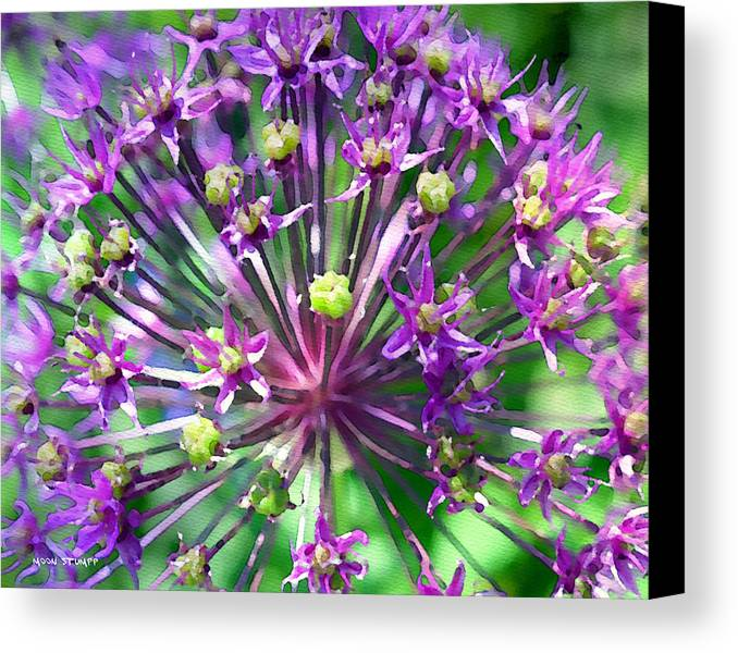 Flower Photography Canvas Print featuring the photograph Allium Series - Close Up by Moon Stumpp