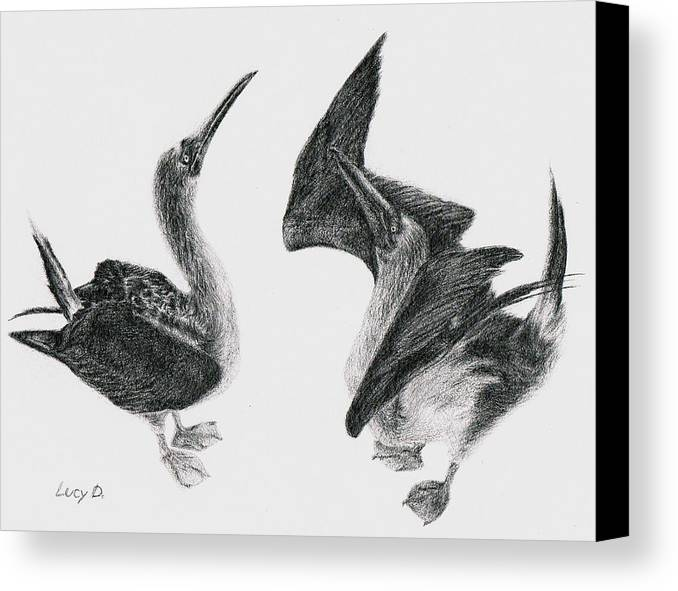 Animals Canvas Print featuring the drawing Blue-footed Boobies by Lucy D