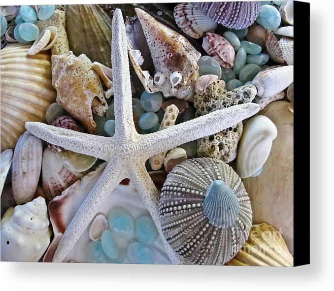 Seashells Canvas Print featuring the photograph Sea Treasure by Colleen Kammerer