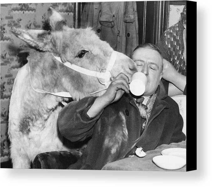 Adults Only Canvas Print featuring the photograph Cheeky Donkey by Fox Photos