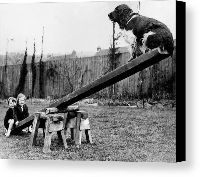 Child Canvas Print featuring the photograph See-saw Dog by Fox Photos