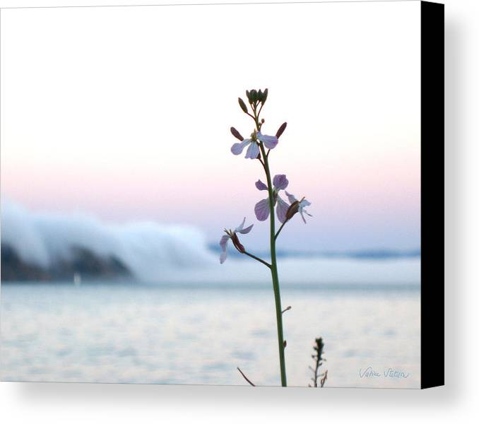 Fog Canvas Print featuring the photograph Evening Fog Rolling In by Sabine Stetson