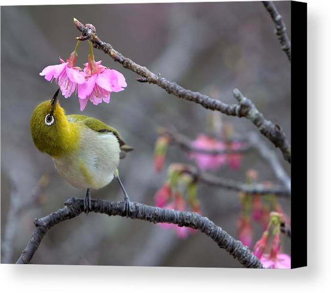Horizontal Canvas Print featuring the photograph Nectar by Karen Walzer