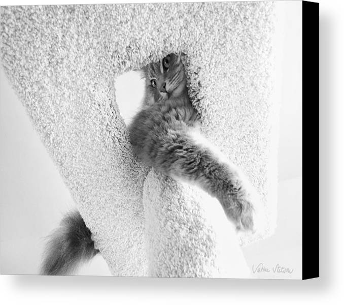 Cat Canvas Print featuring the photograph On Top by Sabine Stetson