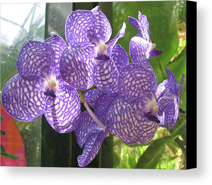 Orchid Canvas Print featuring the photograph Orchid by Darren Stein