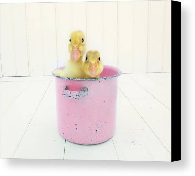 Duck Canvas Print featuring the photograph Duck Soup by Amy Tyler