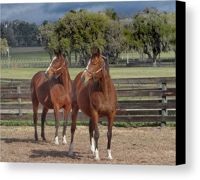 Horse Canvas Print featuring the photograph What Happen by Dennis Dugan