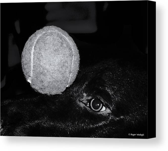 Dog Canvas Print featuring the photograph Keep Your Eye On The Ball by Roger Wedegis