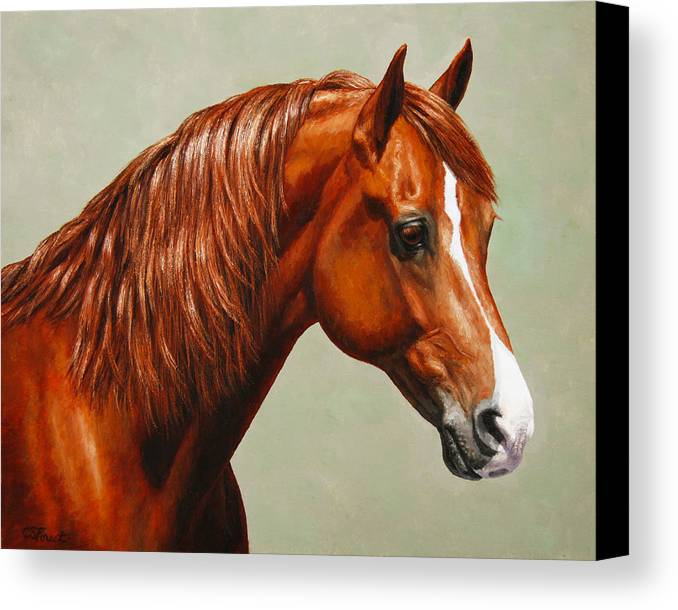Horse Canvas Print featuring the painting Morgan Horse - Flame by Crista Forest