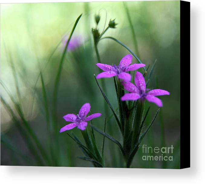 Purple Canvas Print featuring the photograph Ultra Violet by Neal Eslinger