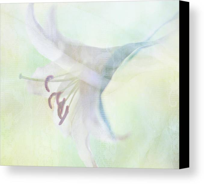 Horizontal Canvas Print featuring the photograph Gentle Lily by Sharon Lapkin