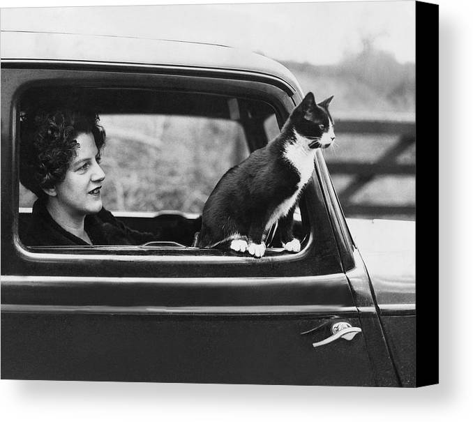 Mid Adult Canvas Print featuring the photograph Motoring Cat by Fox Photos
