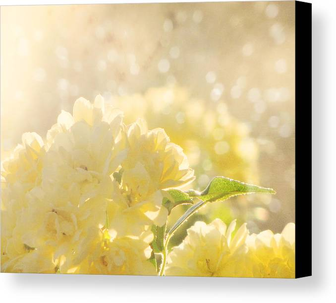 Flower Photography Canvas Print featuring the photograph A Chance Of Showers by Amy Tyler