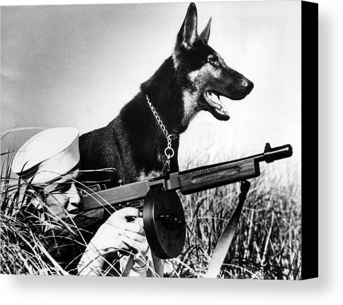 1940s Candid Canvas Print featuring the photograph A Trained German Shepherd Sitting Watch by Everett
