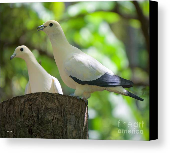 Pigeon Canvas Print featuring the photograph The Duet by Judy Kay