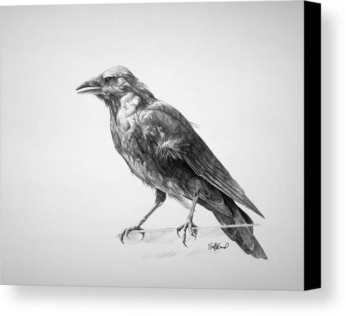 Crow Canvas Print featuring the drawing Crow Drawing by Steve Goad