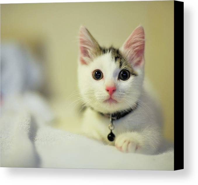 Horizontal Canvas Print featuring the photograph Male Kitten Sitting On Bed by Nazra Zahri