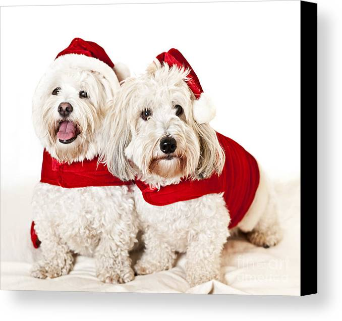 Dogs Canvas Print featuring the photograph Two Cute Dogs In Santa Outfits by Elena Elisseeva