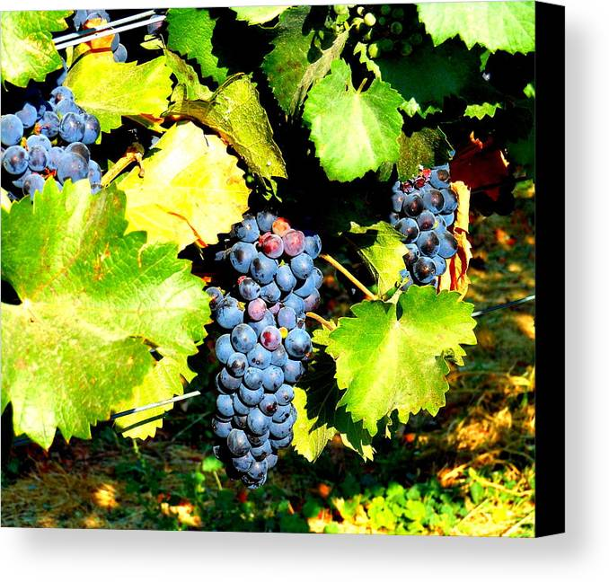 Grapes Canvas Print featuring the photograph A Bunch Of Grapes by Kay Gilley
