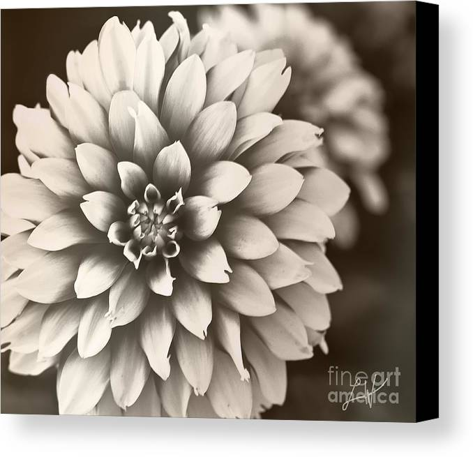 Daliha Canvas Print featuring the digital art Daliha Dreams by Artist and Photographer Laura Wrede