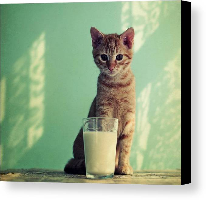 Horizontal Canvas Print featuring the photograph Kitten With Glass Of Milk by By Julie Mcinnes