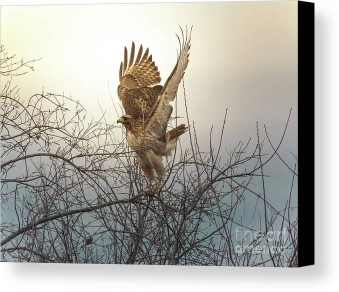 Animal Canvas Print featuring the photograph Flashing The Truckers by Robert Frederick