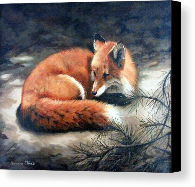 Red Fox Canvas Print featuring the painting Naptime In The Pine Barrens by Sandra Chase