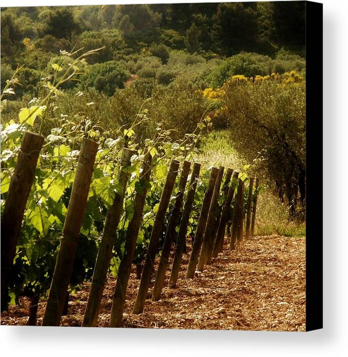 Wine Canvas Print featuring the photograph Wine Growing Pouring And Enjoying by Christine Burdine