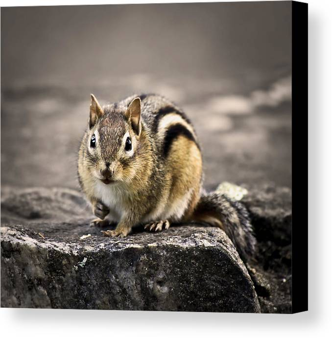 Animal Canvas Print featuring the photograph Got Nuts by Evelina Kremsdorf