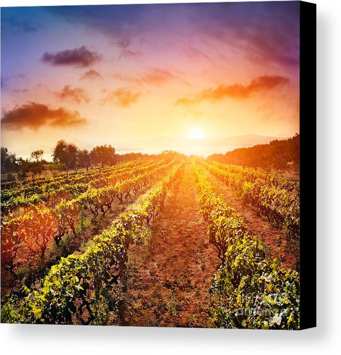 Vineyard Canvas Print by Mythja  Photography