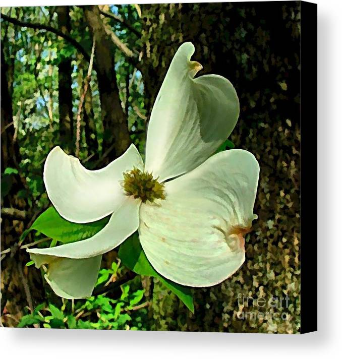 Dogwood Blossom Canvas Print featuring the photograph Dogwood Blossom II by Julie Dant